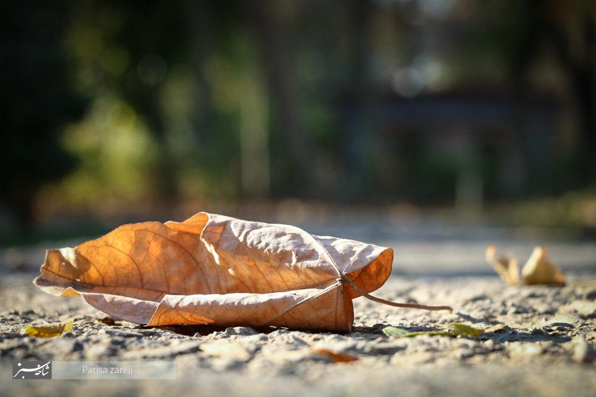 خلوت های پاییزی در قاب تصاویر